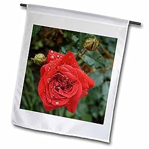 Houk Photography - Flowers - wet red rose - 18 x 27 inch Garden Flag (fl_78984_2)