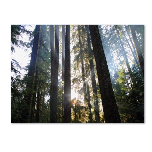 Sunrays by Pierre Leclerc work, 16 by 24-Inch Canvas Wall Art