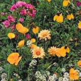 Outsidepride Southwest Wildflower Seed Mix - 1 LB