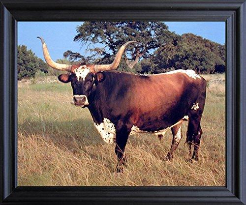 Framed Wall Decoration Texas Longhorn Cow Steer Cattle Farm Animal Picture Black Framed Art Print Poster (Texas Longhorns Framed)