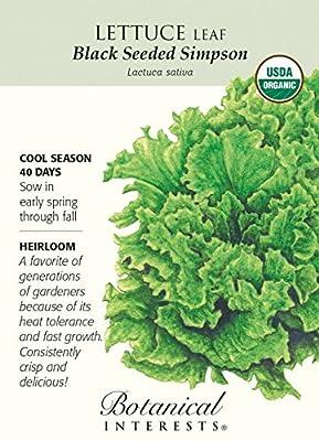 Organic Black Seeded Simpson Lettuce Seeds - 1 gram