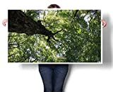 """Mangooly bar Wall Art Summer Tree Canopy Green Leaves Branches Trunk Natural Ecology Growth Foliage Picture Art Poster Print 24""""x20"""""""