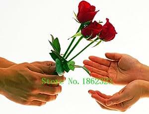 Caliente! 100pcs semillas de flor china Semillas color anaranjado Rose del arco iris con Encanto plantas bonsai para Jardín Precio al por mayor libre de la nave