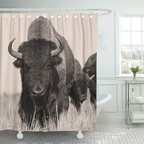 (Emvency Decorative Shower Curtain Head American Bison Buffalo in Sepia The Herd of Shot One Animal 72