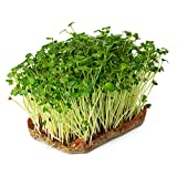 Pack of 20 Jute Plant Grow Mat- Hydroponic Grow