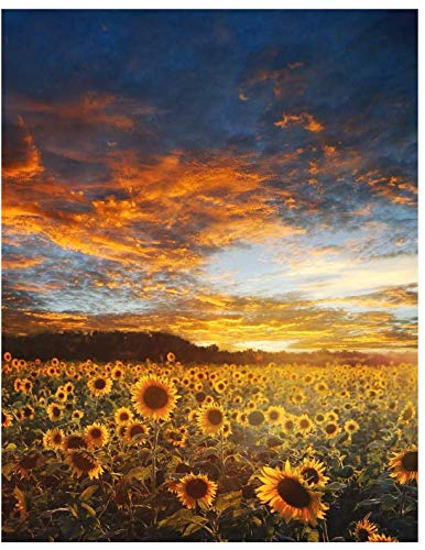 Notebook: Sunflower Composition Notebook/Journal for Adult/Children Flowers Lovers to Writing, Large (8.5x11 Inch. 21.59x27.94 cm.) Wide Ruled Lined Paper 120 Blank Pages (SUNSET&SKY&CLOUDS Pattern)
