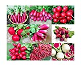 Please Read! This is A Mix!!! 100+ ORGANICALLY Grown Radish Mix 9 Varieties Seeds, Heirloom Non-GMO, Colorful, Pink, Red, White, Sweet and Mild, from USA
