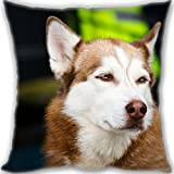 HARLAN Custom Zippered Throw Pillow 50x50cm(20x20inch) Large Size 600g(1.32lb) (Twin sides Print)- husky dog muzzle Leaning Cushion