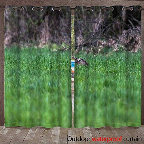 Curtains for Patio Waterproof Alert European Hare with flattened Ears Lying Down in Grass W72 x L108 ()