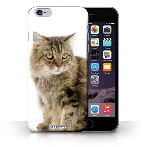 Hülle Case für iPhone 6+/Plus 5.5 / Bengel Entwurf / Katze Collection