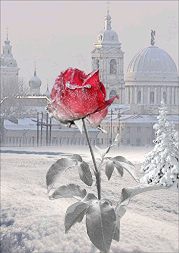 TianMai Hot New DIY 5D Diamond Painting Kit Crystals Diamond Embroidery Rhinestone Painting Pasted Paint By Number Kits Stitch Craft Kit Home Decor Wall Sticker - Ice Snow Red rose Flower, 30x40cm (Crystal Ice Pictures)