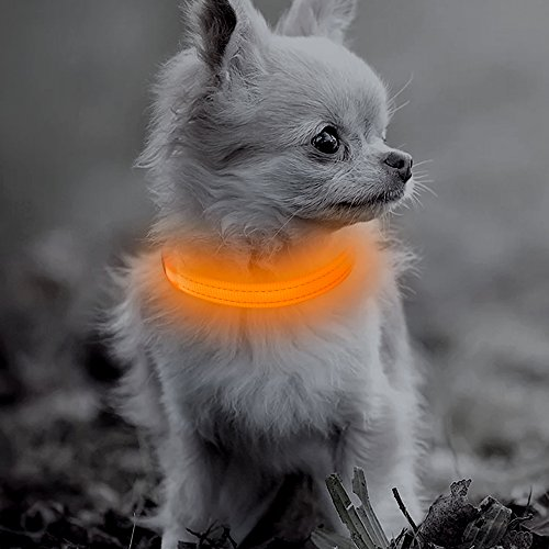 BSEEN LED Dog Collar, USB Rechargeable Glowing Pet Collar, Adjustable Reflective Light Up Safety Collars for Small Dogs& Cats (XS, Orange)