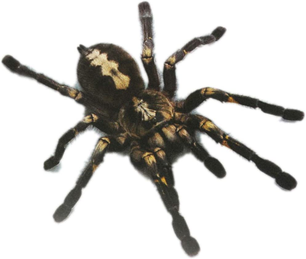 1pcs 2pcs 3d Spinnen Aufkleber Lustige Auto Kopf Schwanz Personality Spinne Aufkleber Abziehbild Dekor Diy Dekoration Topker Küche Haushalt