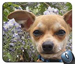 Chihuahua v9 Mouse Pad
