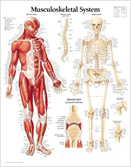 musculoskeletal system ppt
