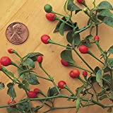 buy Burpee McMahon's Bird Pepper Hot Pepper Seeds 30 seeds now, new 2019-2018 bestseller, review and Photo, best price $7.69