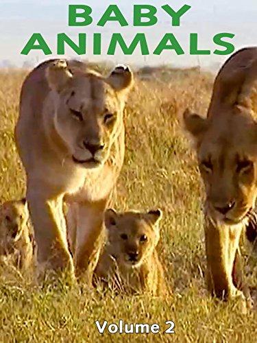 Baby Animals - 5