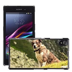 Cas Coq Case Cover // M00146622 Canino mascotas Montañas animales // Sony Xperia Z1 L39 C6903 C6906 C6943 C6902