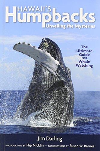 Hawaii's Humpbacks: Unveiling the - Jims Hawaii