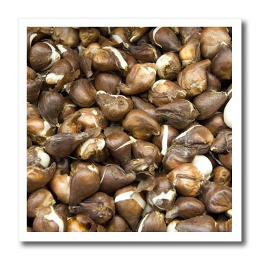 3dRose ht_82274_1 Netherlands, Amsterdam, Market Tulip Bulbs-Cindy Miller Hopkins-Iron on Heat Transfer for Material, 8 by 8-Inch, White ()
