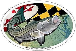 Maryland Rockfish Oval Magnet, 6 x 4 inches - Euro Car Fridge Locker Vinyl Magnet