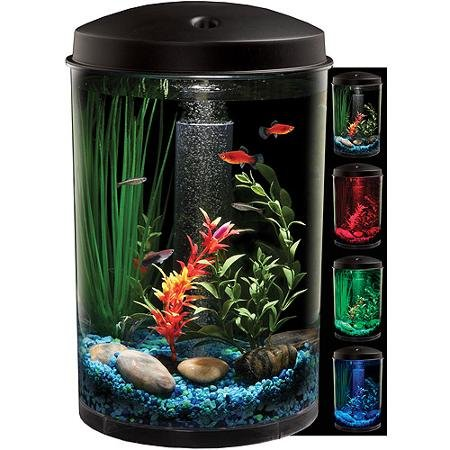 Fish 6 Gallon Tank - 4