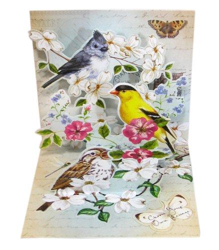 ポップアップ グリーティング カード Garden Bird Trio(庭の鳥のトリオ) B00CMF4YV2