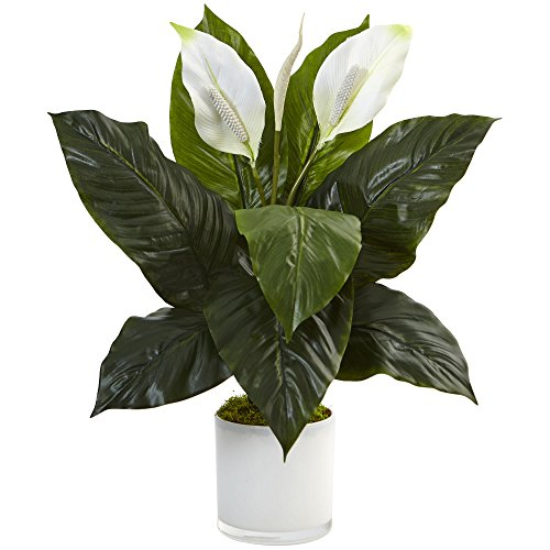 (Nearly Natural 6956 26in. Spathiphyllum Artificial Flowering Peace Lily in Glossy Glass Planter Silk Plants Green)