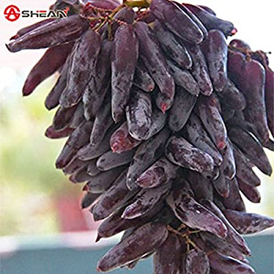100 Seeds / Pack Very Rare Finger Grape Seeds Advanced Fruit Seed Natural Growth Grape Delicious Fruit Plants