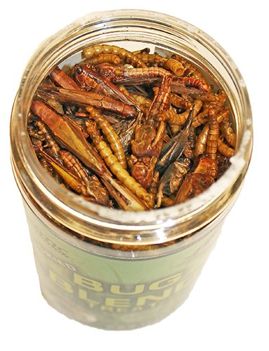 Exotic Nutrition Dried Insect 3 Pack - Crickets, Grasshoppers, Mealworms by Exotic Nutrition (Image #2)