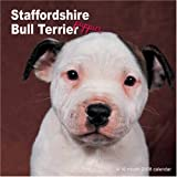 Staffordshire Bull Terriers Puppies 2008 Wall Calendars