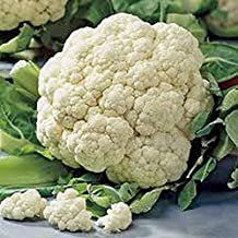 Cauliflower Seed, Snowball Y, Heirloom, Organic, Non Gmo, 25+ Seeds, Large, Delicious and Healthy