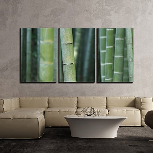 Zen Concept with Bamboos x3 Panels