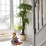 Best Quality Artificial Plants and Trees, Large Beautiful Japanese Fruticosa Tree, Handmade Using Real Bark & Synthetic Leaves, Indoor Plant - 165cm Tall.