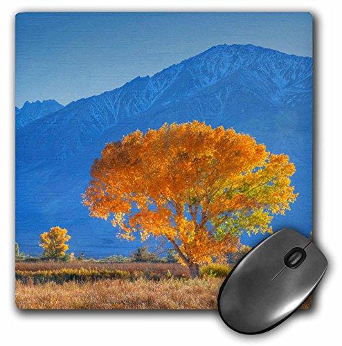Sierra Nevada Mountain Range (3dRose Danita Delimont - Trees - California, Sierra Nevada Range. Cottonwood tree in Owens Valley. - MousePad (mp_258827_1))