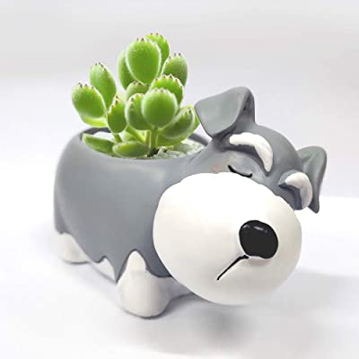 JINFX Creative Juicy Plant Basin Resin Lovely pet Dog Lovely Cartoon Basin Flowerpot Bedroom Balcony Desktop Landscape Flowerpot Decoration (Snow nut): Garden & Outdoor