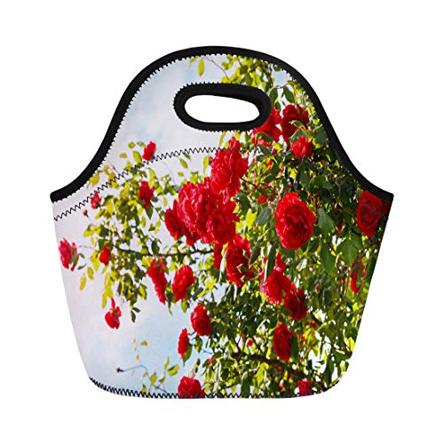 - Semtomn Lunch Bags Beautiful Blue Abundant Red Roses Bush in the Garden Neoprene Lunch Bag Lunchbox Tote Bag Portable Picnic Bag Cooler Bag