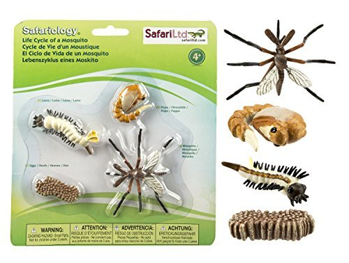 Safari Ltd. Safariology: Life Cycle of a Mosquito