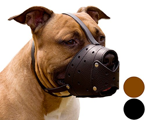 CollarDirect Pit Bull PitBull Terrier Secure Basket Dog Muzzle Genuine Leather Staffordshire Terrier (Cairn Terrier Grooming)