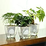 FENGZHITAO 3 Sets Self-Watering Planter, Clear Plastic Automatic-Watering Planter Flower Pot Square-Plant-Pot for All Plants, Succulents, Herb, African Violets, Flowers (3 Packs Medium)