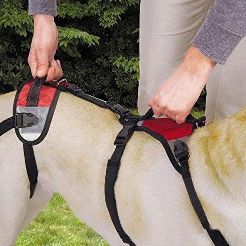 Lift & Go Leads for Dogs Vet Approved Total Pet Health Travel Dog Lead Harness (Small)