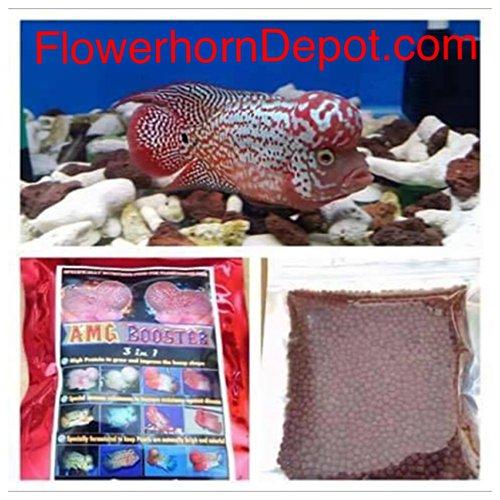 AMGBOOSTER FLOWERHORN Food (Medium) - Buy Online in UAE ...