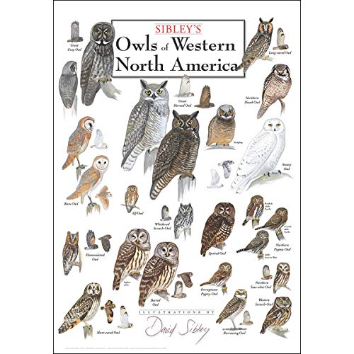 Earth Sky & Water Poster - Sibleys Owls of Western North America