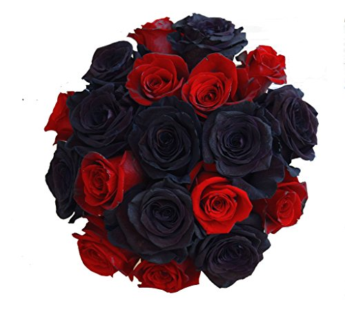 2 Dozen Farm Fresh Black Tinted and Red Roses Bouquet By JustFreshRoses | Long Stem Fresh Black and Red Rose Delivery | Farm Fresh Flowers by justFreshRoses