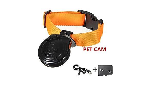 Oumeiou - Collar para mascotas con cámara grabadora de vídeo ...