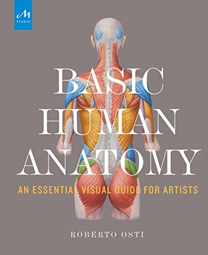 head drawing and anatomy - 8