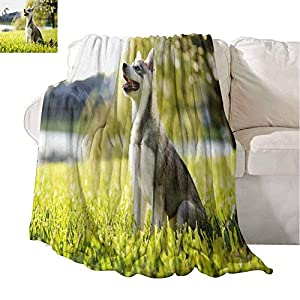 Homrkey Alaskan Malamute Super Soft Warm Throw Blanket Klee Kai Puppy Sitting on Grass Looking Up Friendly Young Cute Animal Easy to Carry Blanket 60 x 90 Inch Multicolor 24
