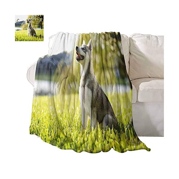 Homrkey Alaskan Malamute Super Soft Warm Throw Blanket Klee Kai Puppy Sitting on Grass Looking Up Friendly Young Cute Animal Easy to Carry Blanket 60 x 90 Inch Multicolor 1