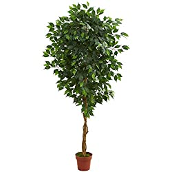Chapman Greens [ 6 Foot] Ficus Tree Artificial Decorative Faux Indoor Floor Plant for Home and Office Decor