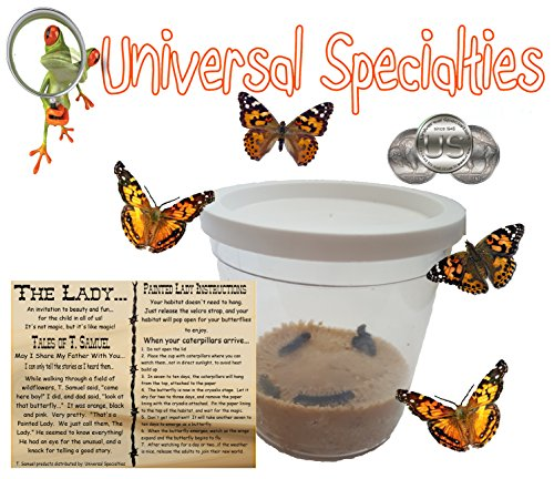 the-lady-live-painted-lady-butterfly-habitat-5-caterpillars